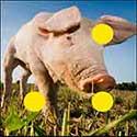 100 pics Animals answers Pig