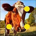 100 pics Animals answers Cow