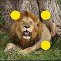 100 pics Animals answers Lion