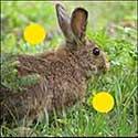 100 pics Animals answers Hare