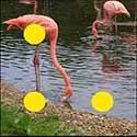 100 pics Animals answers Flamingo