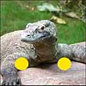 100 pics Animals answers Komodo Dragon