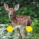 100 pics Animals answers Deer