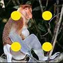 100 pics Animals answers Proboscis