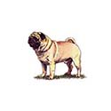 100-pics-dog-breeds-001