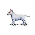 100-pics-dog-breeds-021