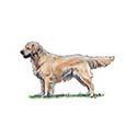 100-pics-dog-breeds-041