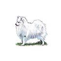 100-pics-dog-breeds-061