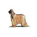 100-pics-dog-breeds-081