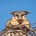 100-pics-i-heart-australia-081