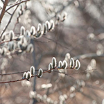 100-pics-spring-041