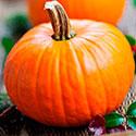 100 pics Taste Test answers Pumpkin