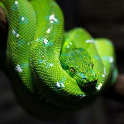 100pics-animals-091-lrg Animal Planet Snake House on snake den under house, snake-infested house, snakes in your house, snakes found in house, snakes in siding of house,