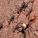 100 pics answers Bugs