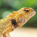 100 pics Z Is In answers Lizard